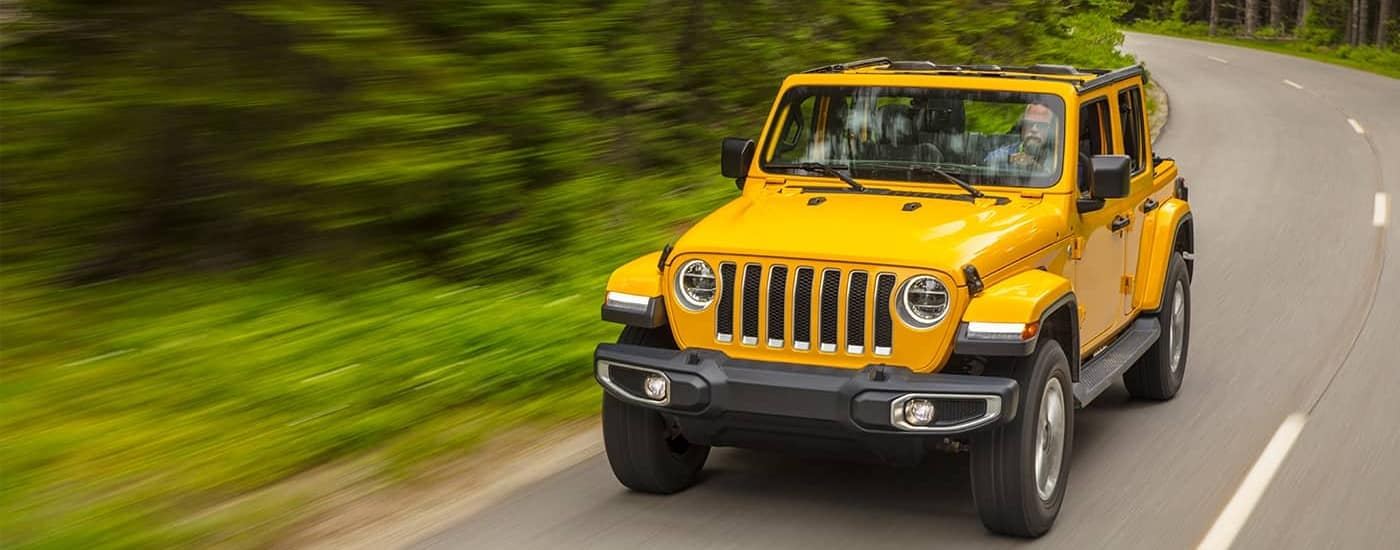 yellow-wrangler-in-forest