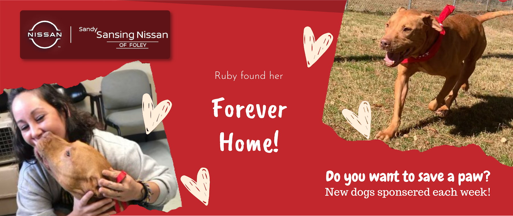 Save a paw- Ruby Banner_Website-Carousel-Graphic-v1